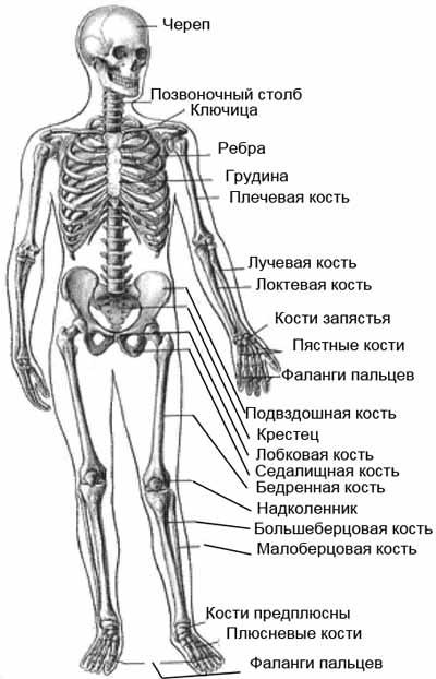 физического тела человека